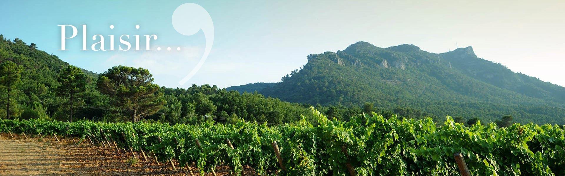 La Provence : un terroir plein de promesses