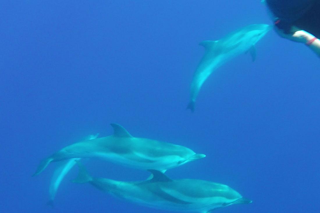Rencontrez dauphins, baleines et poissons-lune en Méditerranée !