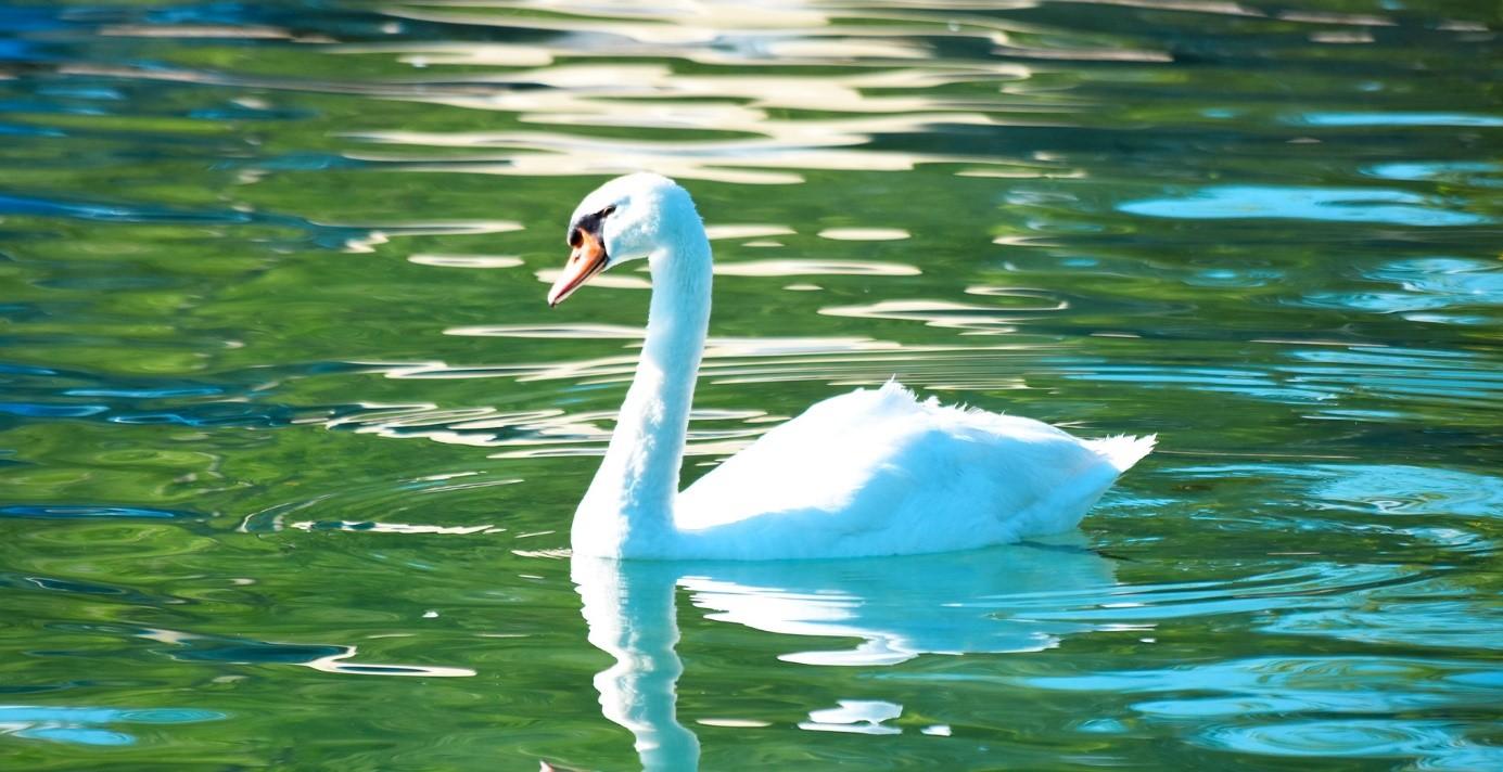 Passez des vacances exceptionnelles au bord du lac d'Annecy