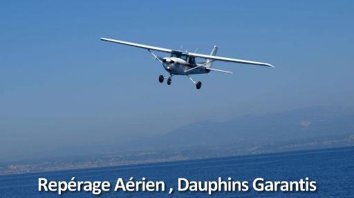 Nager ou observer dauphins et baleines sauvages de très près (Côte d'Azur)!